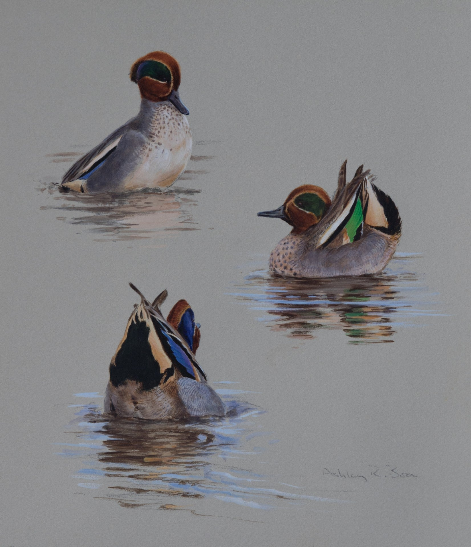 "'Displaying Teal Studies' Original watercolour by Ashley Boon - 12"" x 10.25"""
