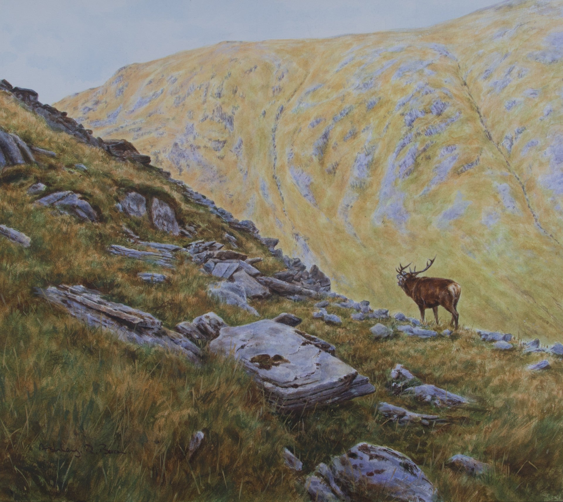 "'Roaring on High Ground' Original watercolour by Ashley Boon - 14"" x 16"""