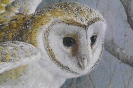 'Barn Owl' Limited Edition Print by Basil Ede - 50cm x 40cm