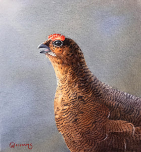 'Grouse Head Study' - Original Watercolour Painting by Owen Williams - 14 x 14cm