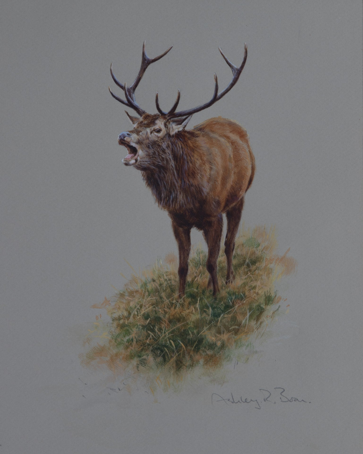 "'Roaring Stag' Original watercolour by Ashley Boon - 11"" x 8.5"""