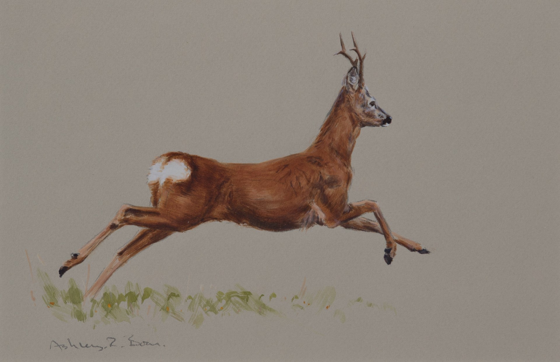 "'Bolting Roe Buck' Original watercolour by Ashley Boon - 6.5"" x 10"""