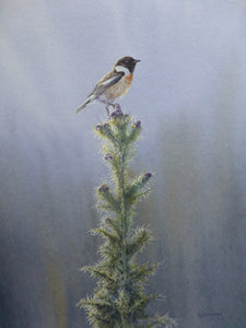 'Thistle Stonechat' - Original Watercolour Painting by Owen Williams - 27 x 37cm