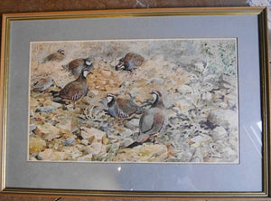 'Redleg Partridges' Print by Rodger McPhail