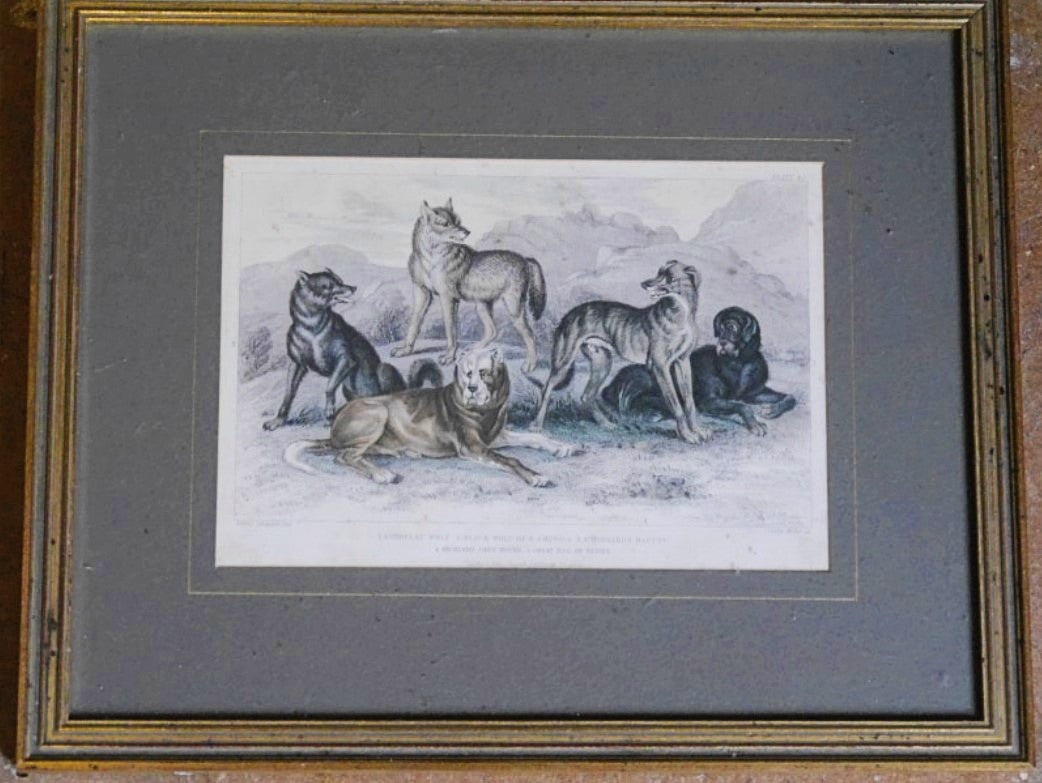 'Hunting Dogs and Wolves' Print - 15cm x 22cm