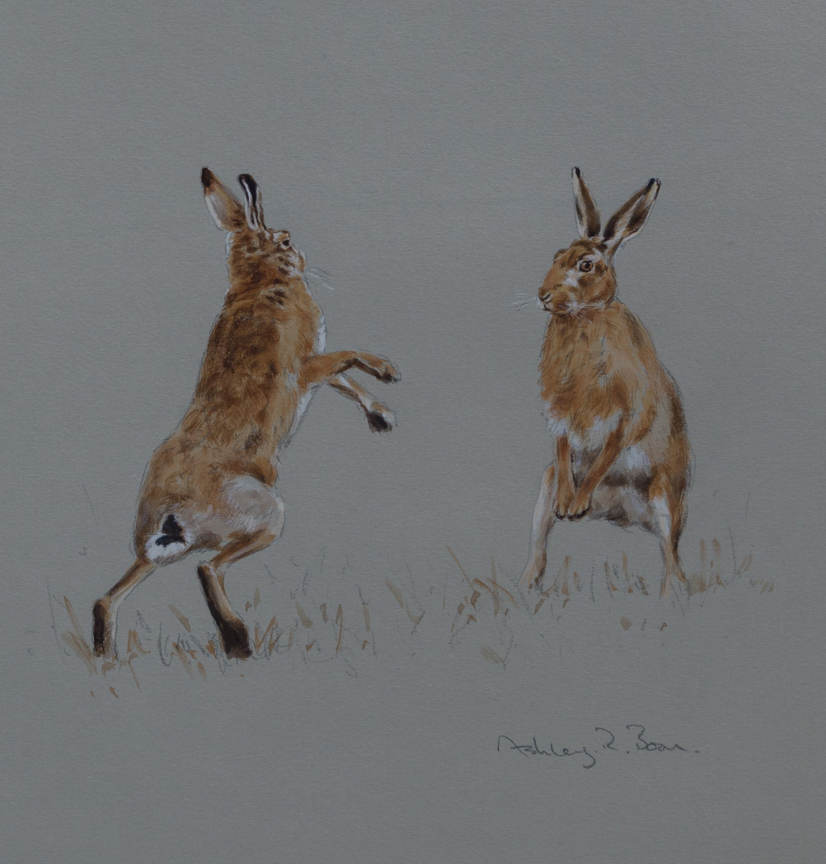 "'Boxing Hares Sketch' - Original watercolour by Ashley Boon - 11"" x 10"""