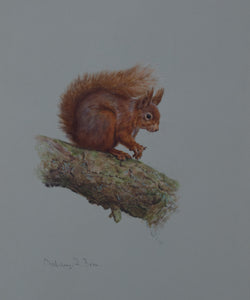 "'Red Squirrel I' - Original watercolour by Ashley Boon - 12"" x 9.5"""