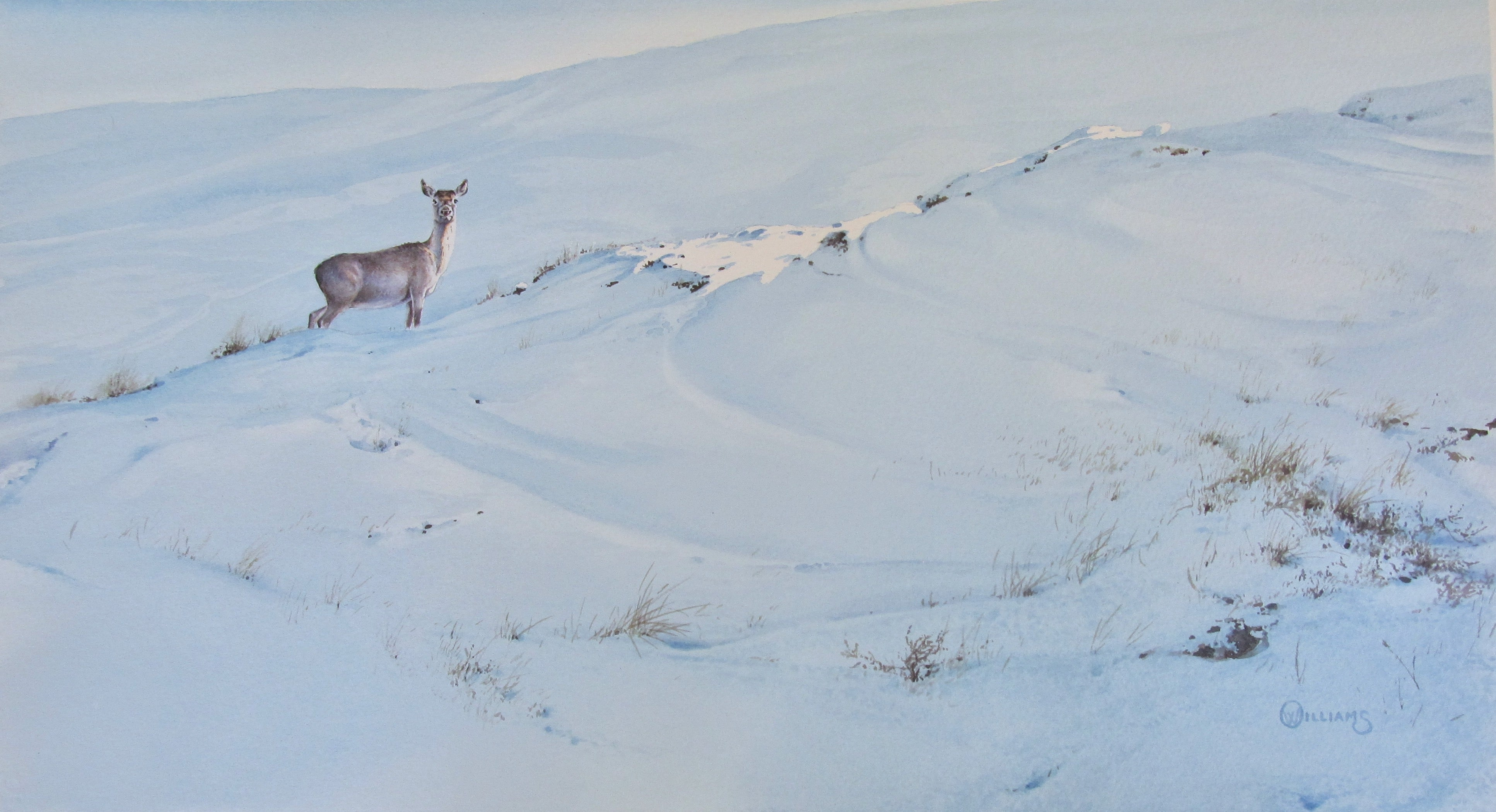 'Winter Hind' - Original Watercolour Painting by Owen Williams - 27 x 48cm
