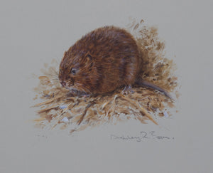 'Water Vole' - Original watercolour by Ashley Boon - 7.75 x 9""