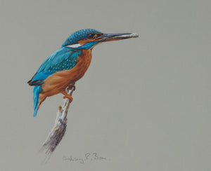 "'Kingfisher with Fry' - Original watercolour by Ashley Boon - 7.5"" x 8.5"""