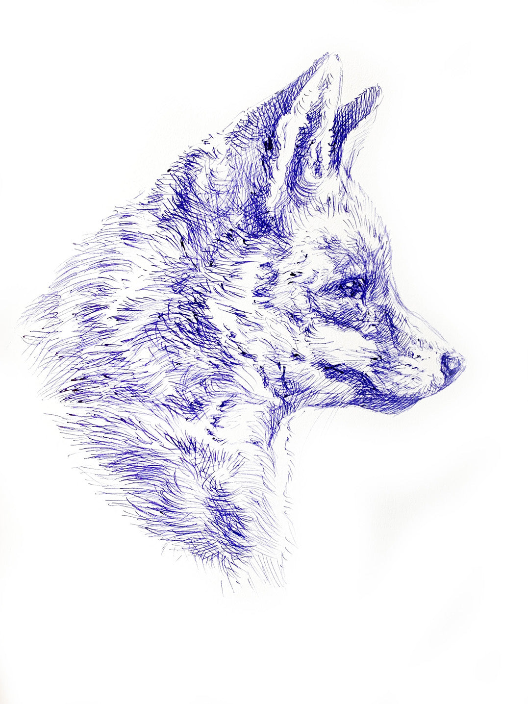 'Fox Head Study' - Original Ink Drawing by David Cemmick - 35 x 25cm