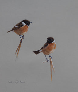 "'Cock Stonechat Studies' - Original watercolour by Ashley Boon - 10.25"" x 8.5"""