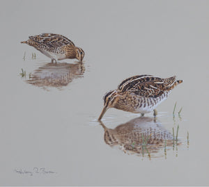 'Feeding Snipe Studies' - Original watercolour by Ashley Boon - 10.5 x 11.25""