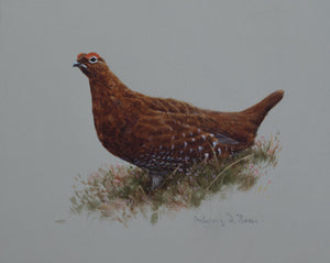 "'Red Grouse Portrait' Original watercolour by Ashley Boon - 7.5"" x 9"""