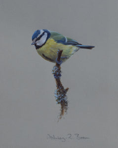 "'Blue Tit Study' - Original watercolour by Ashley Boon - 7.75"" x 6"""