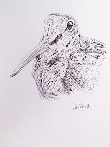 'Woodcock' - Original Ink Drawing by David Cemmick - 35 x 25cm