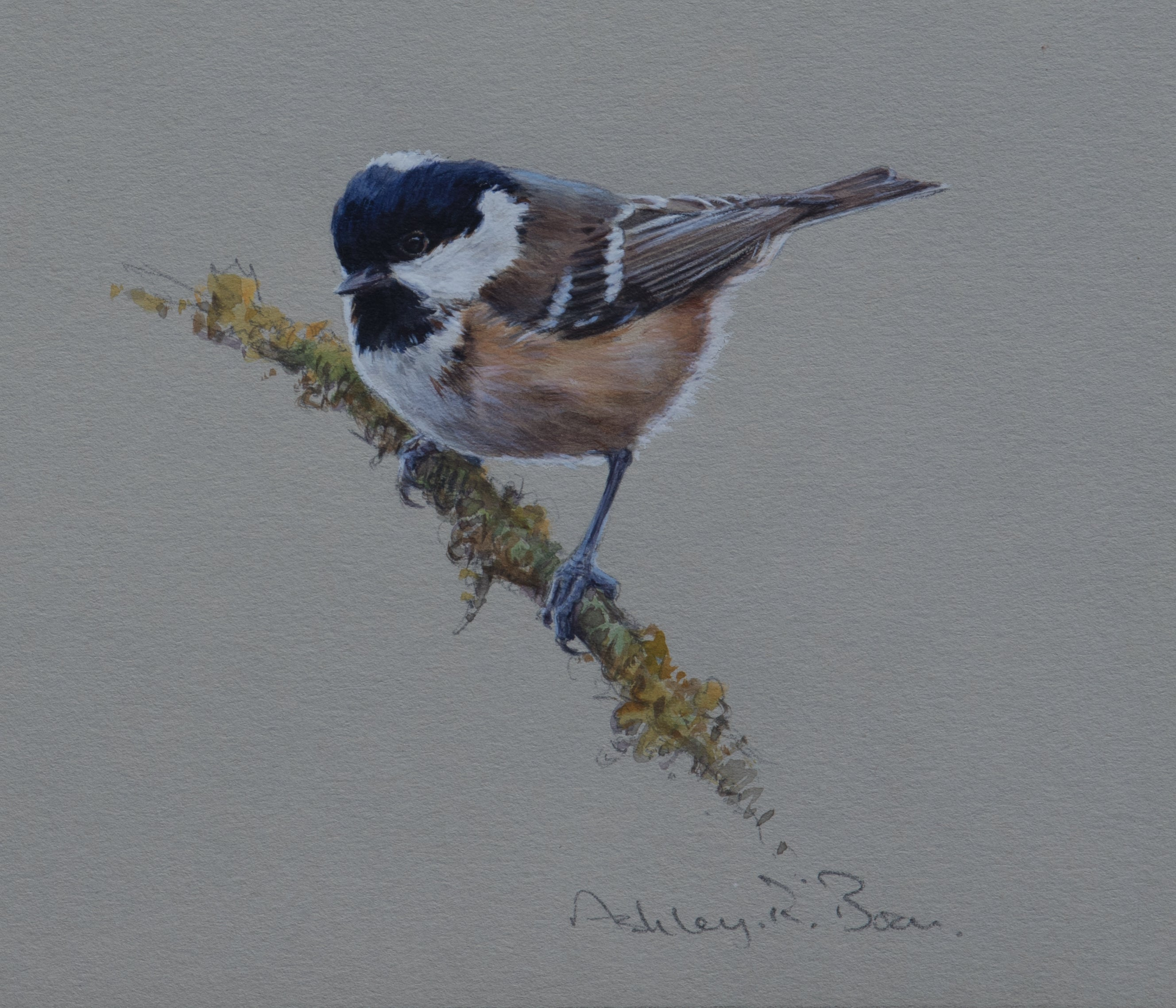 "'Coal Tit Study' - Original watercolour by Ashley Boon - 5.75"" x 6"""