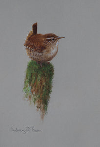 "'Wren Study' - Original watercolour by Ashley Boon - 8"" x 5.75"""