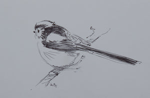 "'Long-Tailed Tit' - Original Pen Sketch by Ashley Boon - 4"" x 6"""