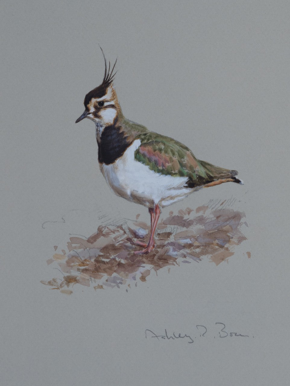 'Lapwing Study' - Original watercolour by Ashley Boon - 8.5 x 6.5""