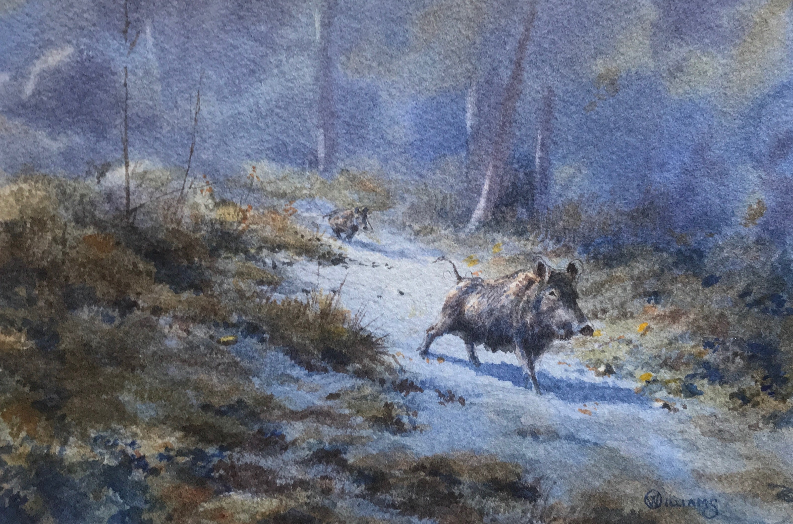 'Running Boar' - Original Watercolour Painting by Owen Williams - 13 x 20cm
