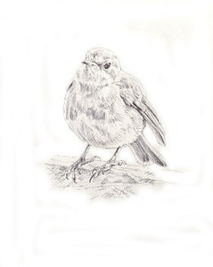 'Robin' - Original Ink Drawing by David Cemmick - 30 x 30cm