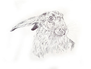 'Hare head study' - Original Ink Drawing by David Cemmick - 30 x 35cm