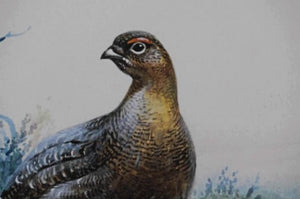 'Grouse Covey' Signed Original Painting by Rodger McPhail - 28cm x 37cm