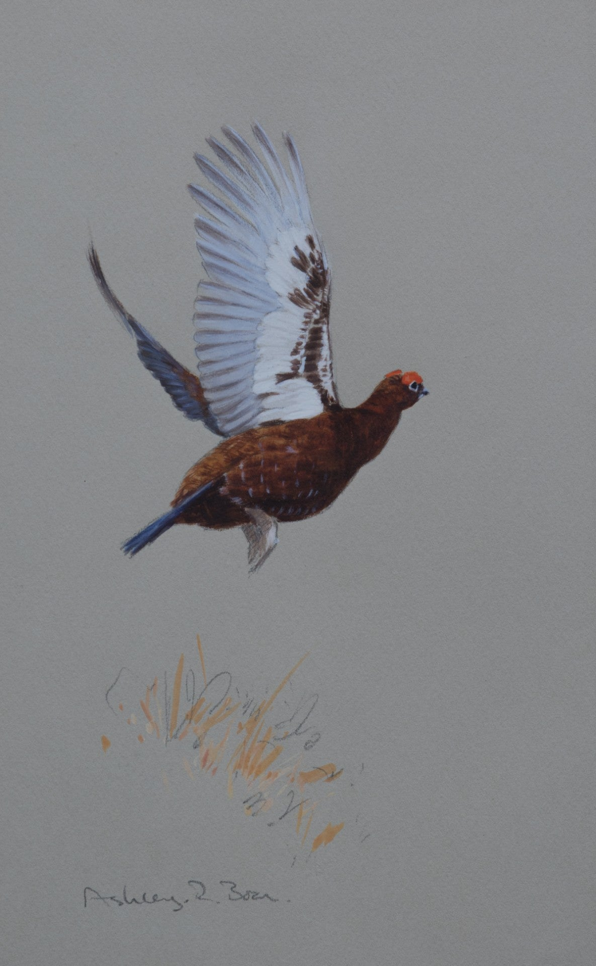 "'Lifting Grouse' Original watercolour by Ashley Boon - 9.75"" x 6.25"""