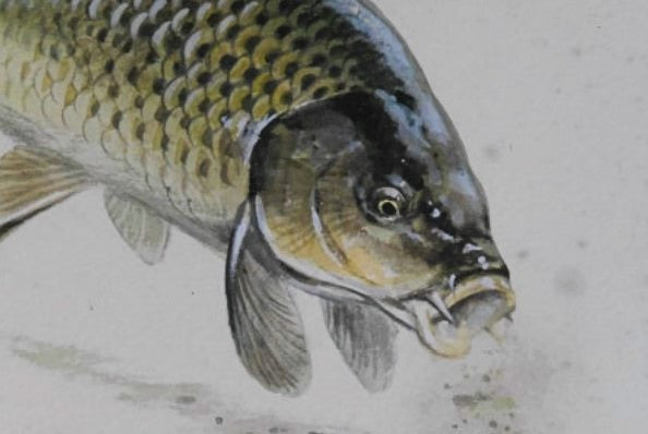 'Carp with Newt' Signed Original Painting by Rodger McPhail - 30.5cm x 30.5cm