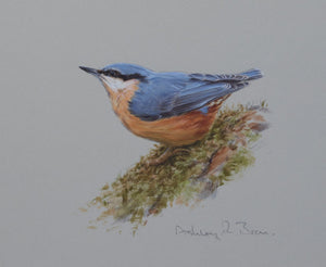 'Nuthatch Study' - Original watercolour by Ashley Boon - 6 x 7.25""