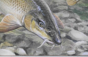 'Barbel' by Signed Original Painting by Rodger McPhail - 19.5cm x 41cm