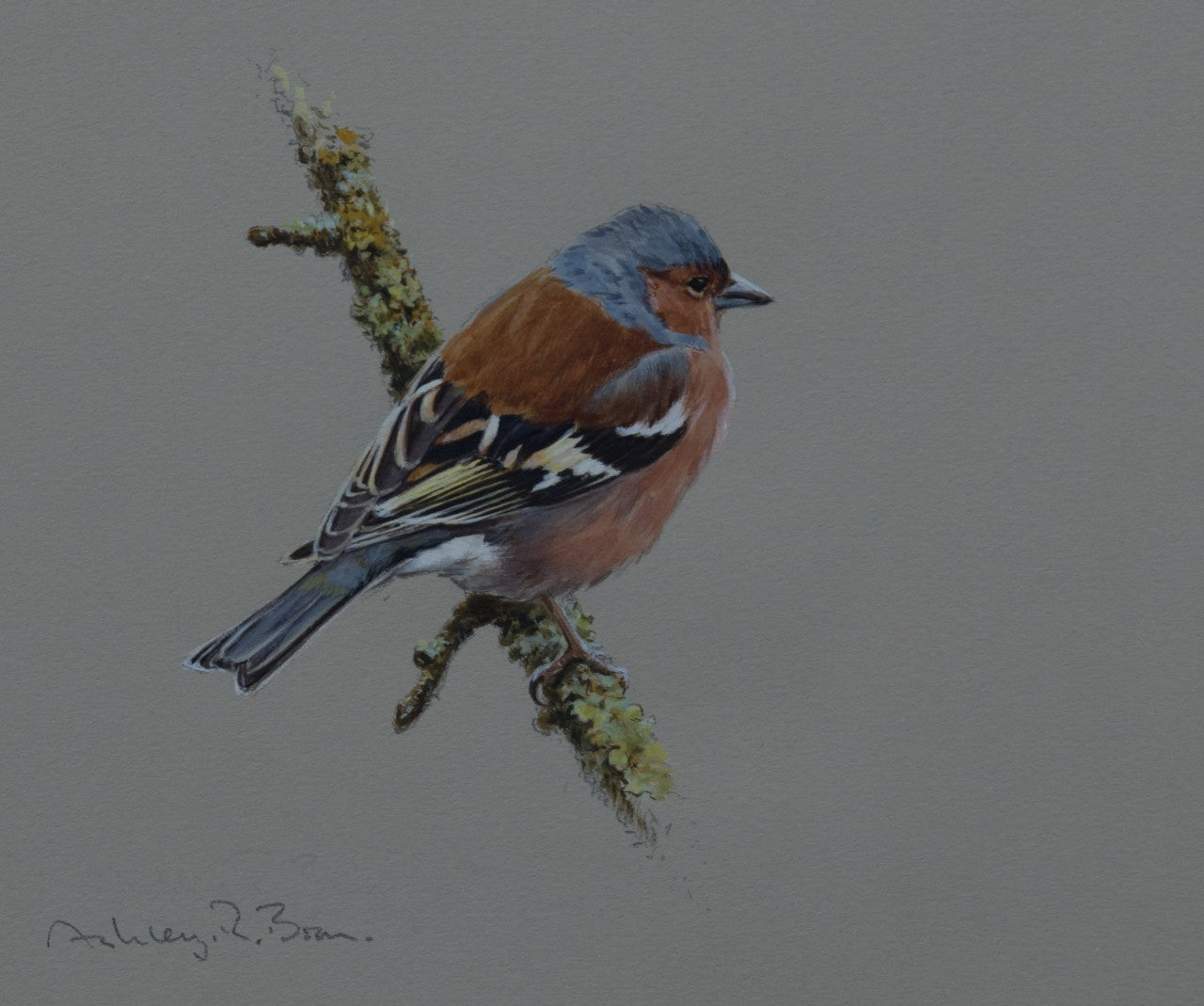 'Cock Chaffinch Study' - Original by Ashley Boon - 7 x 7.5""