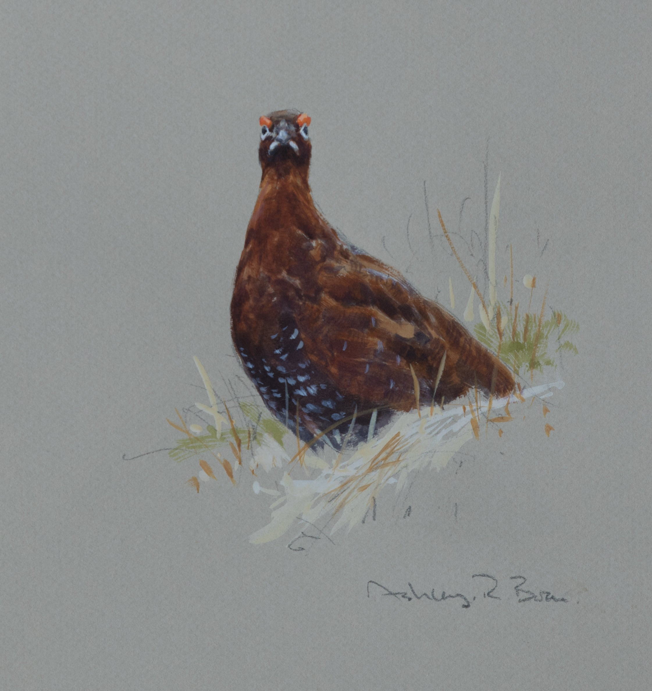 'Red Grouse Sketch' - Original by Ashley Boon - 7.75 x 7""