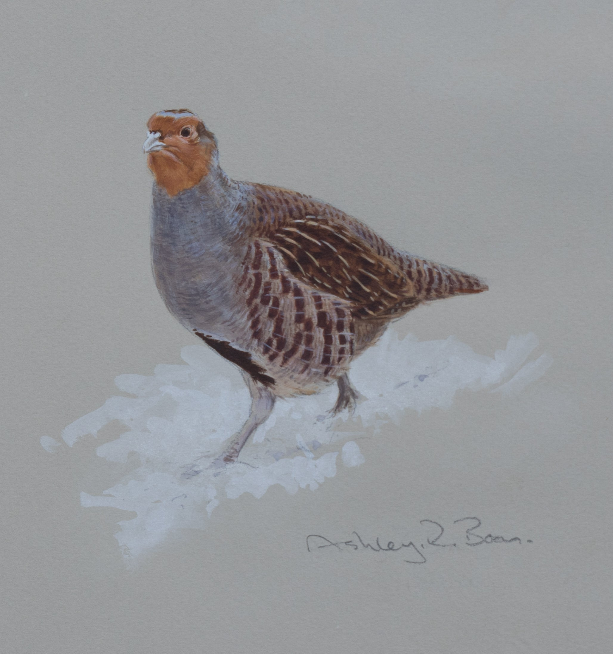 "'Grey Partridge in Snow Sketch' Original watercolour by Ashley Boon - 7.5"" x 6"""