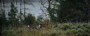 'November Roe' - Original Oil Painting by Alistair Makinson - 12 x 28cm
