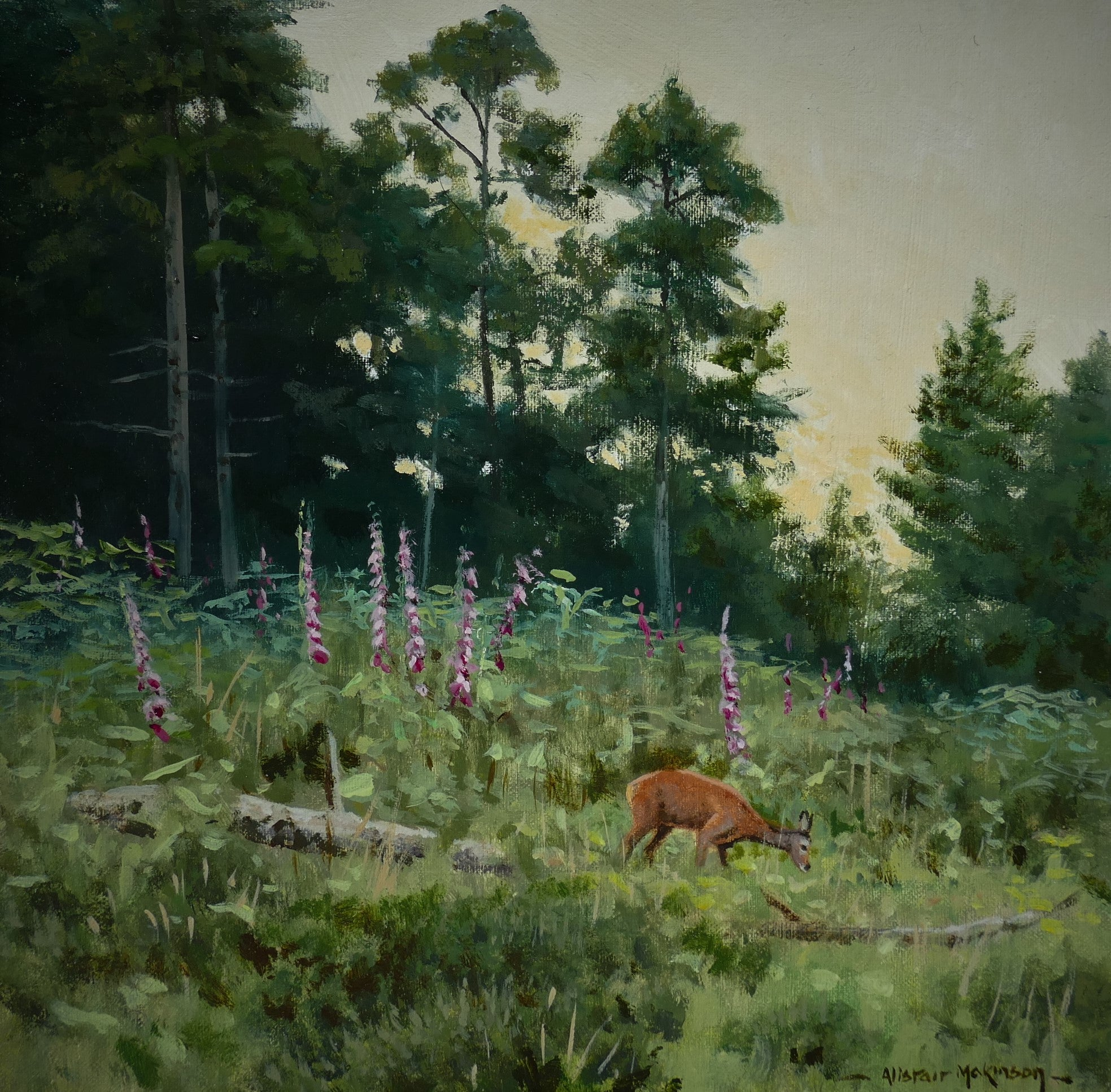'Roe and Foxgloves' - Original Oil Painting by Alistair Makinson - 20 x 20cm