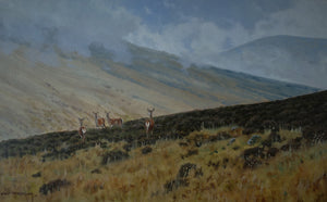 'Wary Hinds' - Original Oil Painting by Alistair Makinson - 31 x 50cm