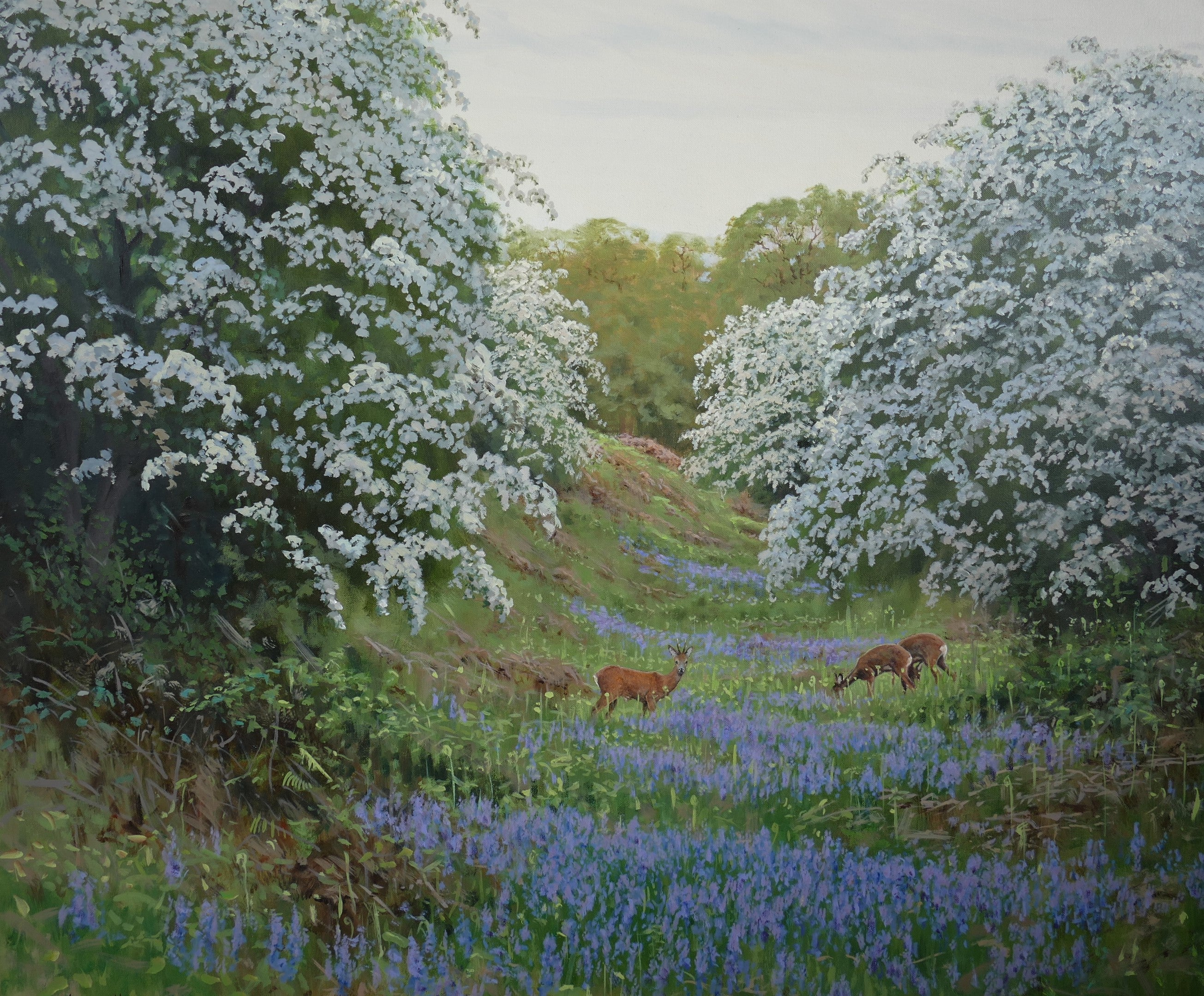 'Bluebells and Roe' - Original Oil Painting by Alistair Makinson - 60 x 70cm