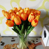 Plante Décorative<br>Tulipes