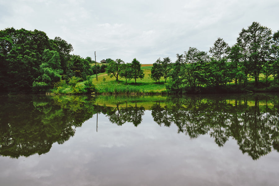 Natural Pond Products To Stop Algae Bloom | Organic Pond