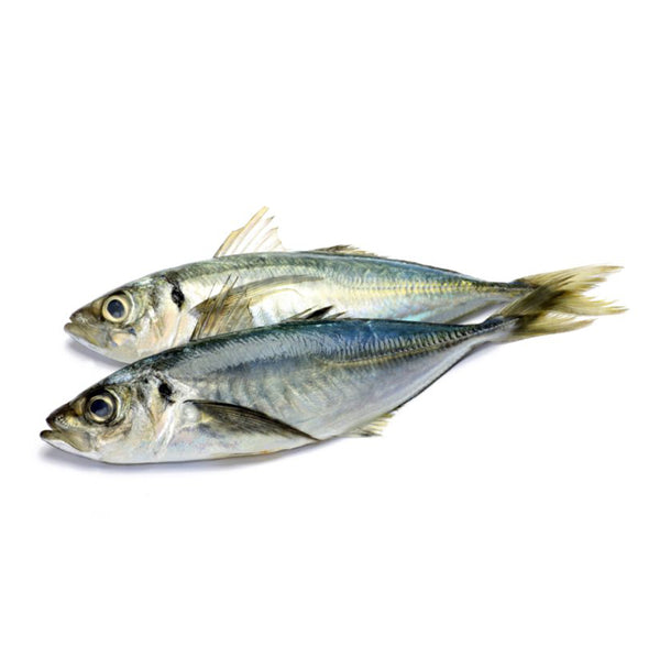 Fresh Istavrit (Mackerel) 5kg box