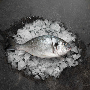 Gilt Head Bream 400-600 - fishtoyourdoor - UK FISH DELIVERY