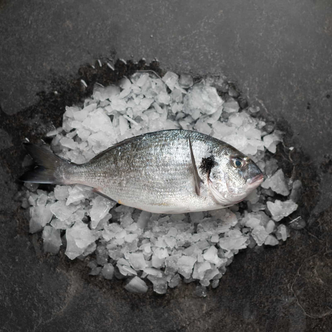 Gilt Head Bream 400-600 - Fish To Your Door