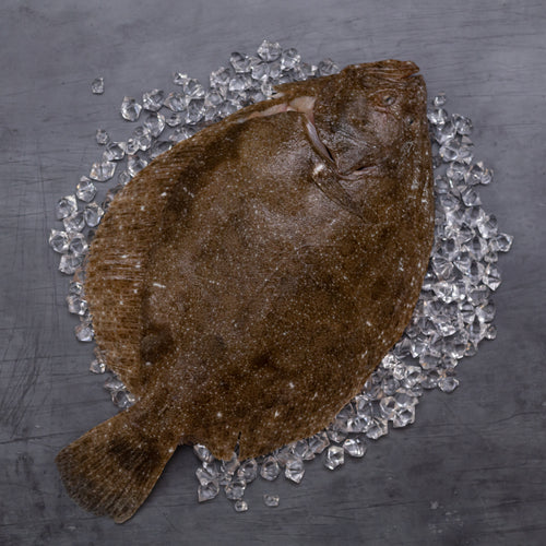 Brill Whole - Fish To Your Door
