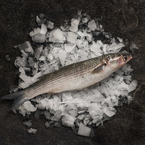 Grey Mullet - fishtoyourdoor - UK FISH DELIVERY
