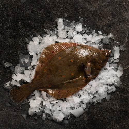 Plaice - fishtoyourdoor - UK FISH DELIVERY