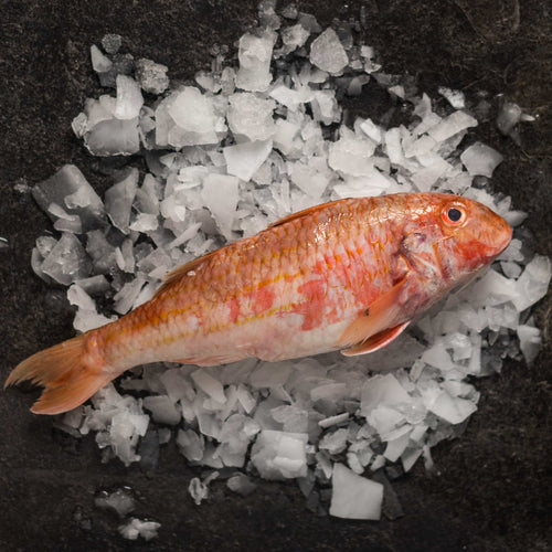 Red Mullet - fishtoyourdoor - UK FISH DELIVERY