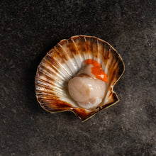 Load image into Gallery viewer, King Scallops - fishtoyourdoor - UK FISH DELIVERY