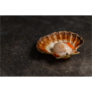 King Scallops - fishtoyourdoor - UK FISH DELIVERY